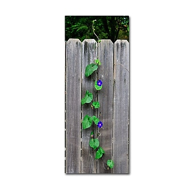 Trademark Fine Art 'Morning Glory Fence 2' 24