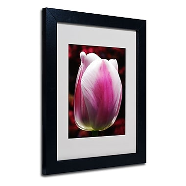 Trademark Fine Art 'Perfect Pink and White Tulip'