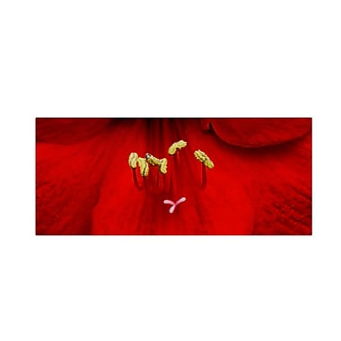 Trademark Fine Art 'Red (Amaryllis)' 10