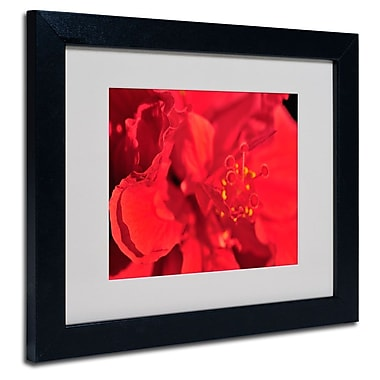 Trademark Fine Art 'Red Red Hibiscus'