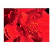 "Trademark Fine Art 'Red Red Hibiscus' 30"" x 47"" Canvas Art"