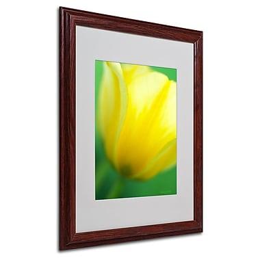 Trademark Fine Art 'Hint of a Tulip' 16