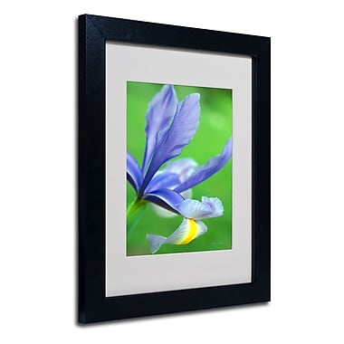 Trademark Fine Art 'Spring Iris'