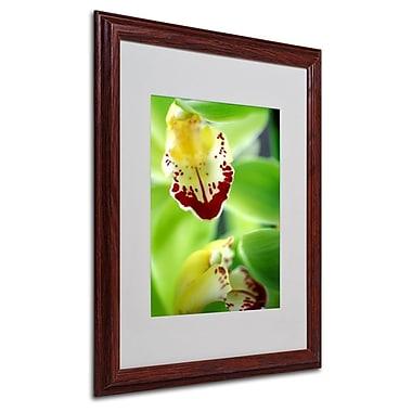 Trademark Fine Art 'Cymbidium Seafoam Emerald Orchid' 16