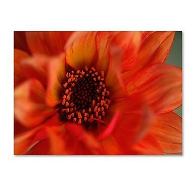 Trademark Fine Art 'Fiery Dahlia' 16