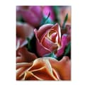 Trademark Fine Art 'Mauve and Peach Roses' 18in. x 24in. Canvas Art