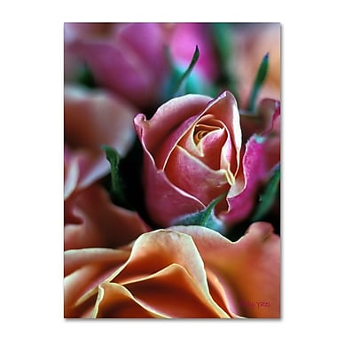 Trademark Fine Art 'Mauve and Peach Roses' 22