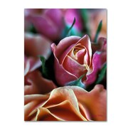 "Trademark Fine Art 'Mauve and Peach Roses' 14"" x 19"" Canvas Art"