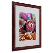 "Trademark Fine Art 'Mauve and Peach Roses' 16"" x 20"" Wood Frame Art"