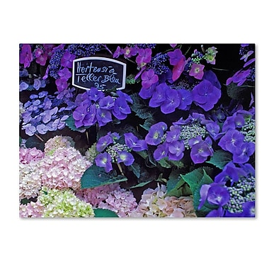 Trademark Fine Art 'Paris Flower Market Hydrangeas' 24