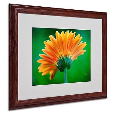 Trademark Fine Art 'Orange Burst' 16