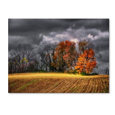 Trademark Fine Art 'Autumn Field' 30
