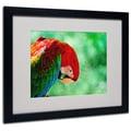 Trademark Fine Art 'Colorful Macaw' 16in. x 20in. Black Frame Art