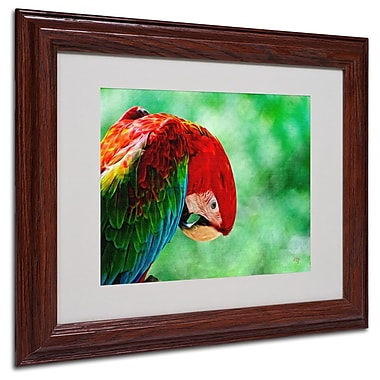 Trademark Fine Art 'Colorful Macaw' 11