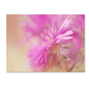 Trademark Fine Art 'Dewy Pink Aster' 14