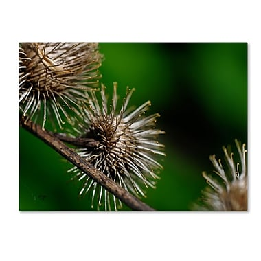 Trademark Fine Art 'Prickly' 22