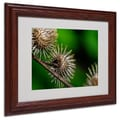 Trademark Fine Art 'Prickly' 11in. x 14in. Wood Frame Art