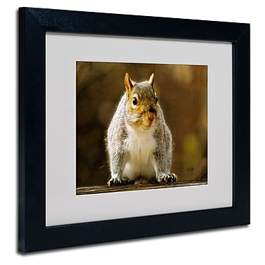 Trademark Fine Art 'Smiling Squirrel'
