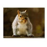 """Trademark Fine Art 'Smiling Squirrel' 14"""" x 19"""" Canvas Art"""