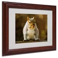 Trademark Fine Art 'Smiling Squirrel' 11in. x 14in. Wood Frame Art