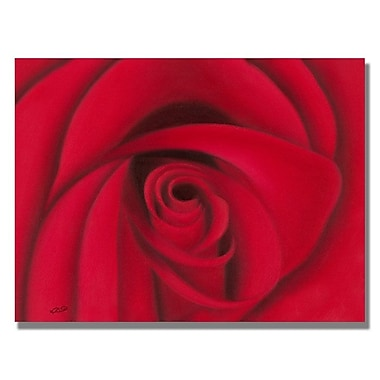 Trademark Fine Art 'Red Rose'