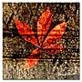 Trademark Fine Art ' Red Leaves I' 18
