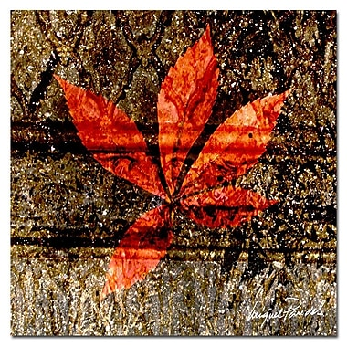 Trademark Fine Art ' Red Leaves I' 18