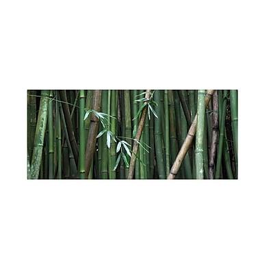 Trademark Fine Art 'Bamboo' 10