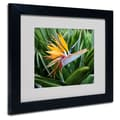 Trademark Fine Art 'Bird of Paradise'