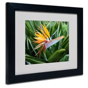 Trademark Fine Art 'Bird of Paradise'