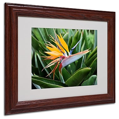 Trademark Fine Art 'Bird of Paradise' 11