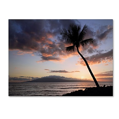 Trademark Fine Art 'Palm Tree Maui' 22