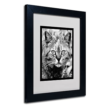 Trademark Fine Art 'Black & White Pretty Kitty'