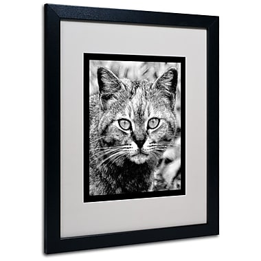 Trademark Fine Art 'Black & White Pretty Kitty' 16