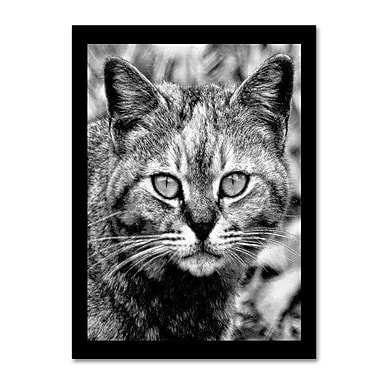 Trademark Fine Art 'Black & White Pretty Kitty' 14