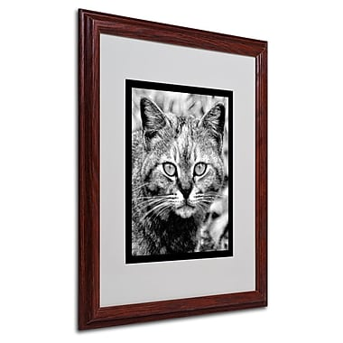 Trademark Fine Art 'Black & White Pretty Kitty' 16
