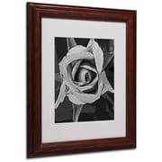 """Trademark Fine Art 'Black & White Rose' 11"""" x 14"""" Wood Frame Art"""