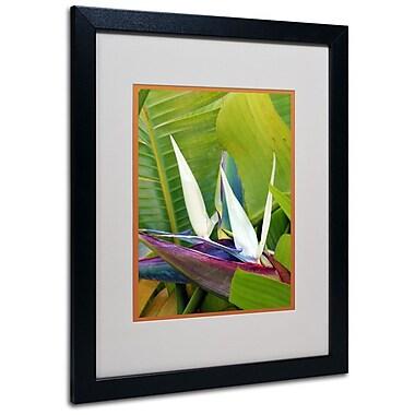 Trademark Fine Art 'Paradise Color' 16