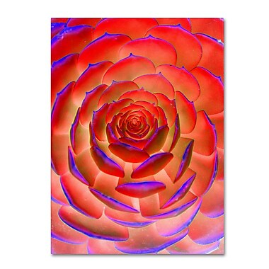 Trademark Fine Art 'Plant Art' 22