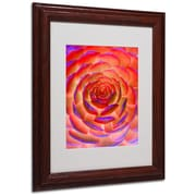 "Trademark Fine Art 'Plant Art' 11"" x 14"" Wood Frame Art"