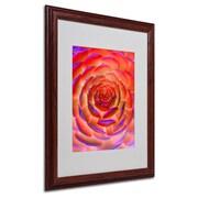 "Trademark Fine Art 'Plant Art' 16"" x 20"" Wood Frame Art"