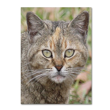 Trademark Fine Art 'Pretty Kitty' 35