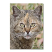 "Trademark Fine Art 'Pretty Kitty' 35"" x 47"" Canvas Art"