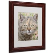 "Trademark Fine Art 'Pretty Kitty' 11"" x 14"" Wood Frame Art"