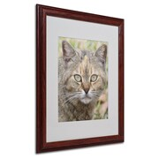 "Trademark Fine Art 'Pretty Kitty' 16"" x 20"" Wood Frame Art"