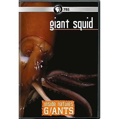 Inside Nature's Giants - Giant Squid (DVD)