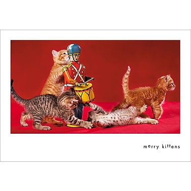 Sunrise Adorable Kittens Holiday Boxed CardsHooray For The Underdog®