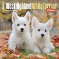 2014 Browntrout West Highland White Terrier Puppies  Square 12x12