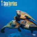 2014 Browntrout Sea Turtles  Square 12x12