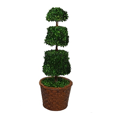 Laura Ashley 49in. Preserved Spiral Boxwood Cone Topiary in 17in. Fiberstone Planter